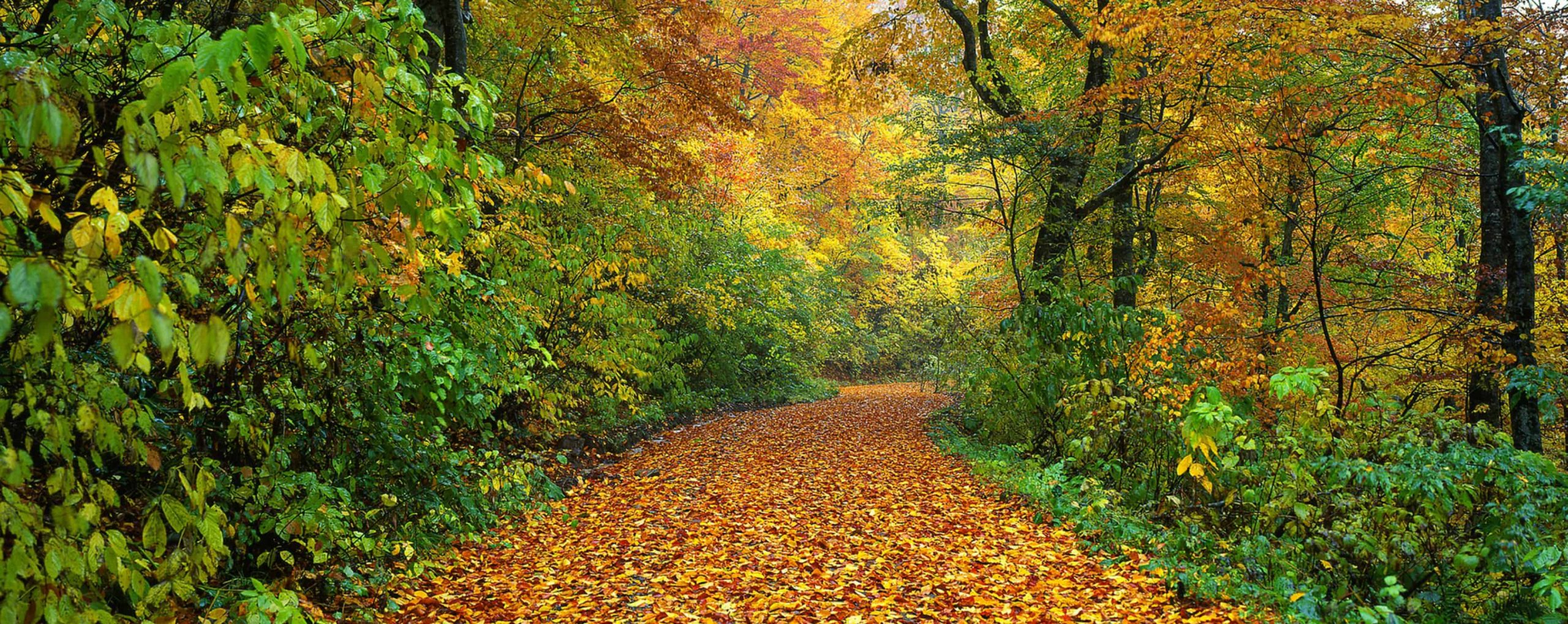 ORTHOtechnik_Titelbild_News_Der Herbst ist wieder da